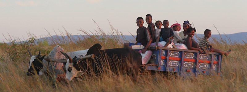 In Madagascar ora si lotta contro la Peste  Polmonare